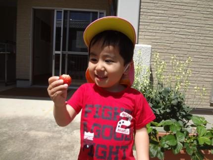 プランターのイチゴ